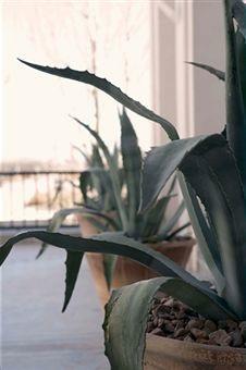 piante_grasse1