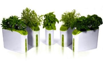 piante-in-ogni-stagione