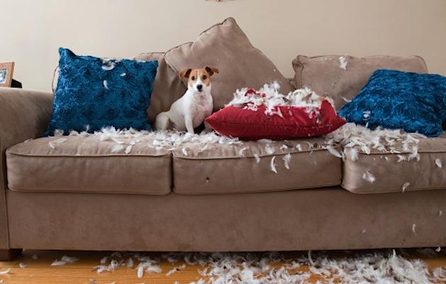Come pulire un divano in microfibra senza rovinarlo - Donne Sul Web