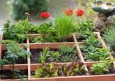 orto e fiori in terrazza