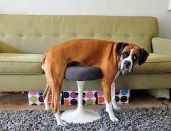 Cani colti sul fatto. Foto Virali
