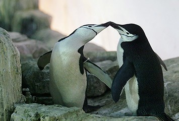 omosessualità nella natura