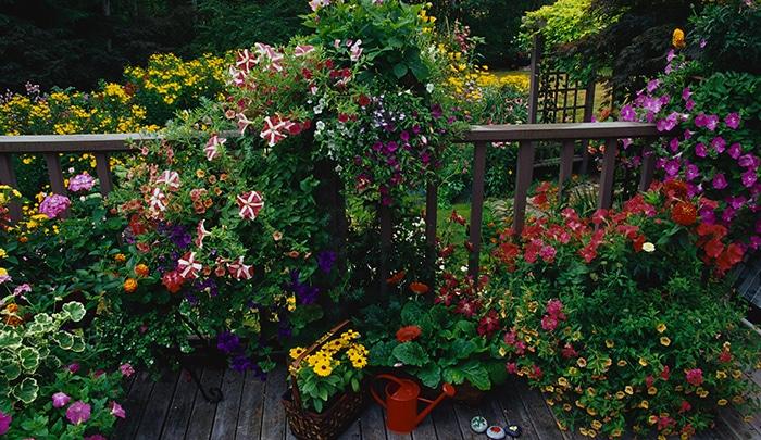 piante da terrazzo utili e belle donnesulweb