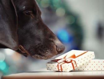 Natale, cosa regalo con pochi soldi