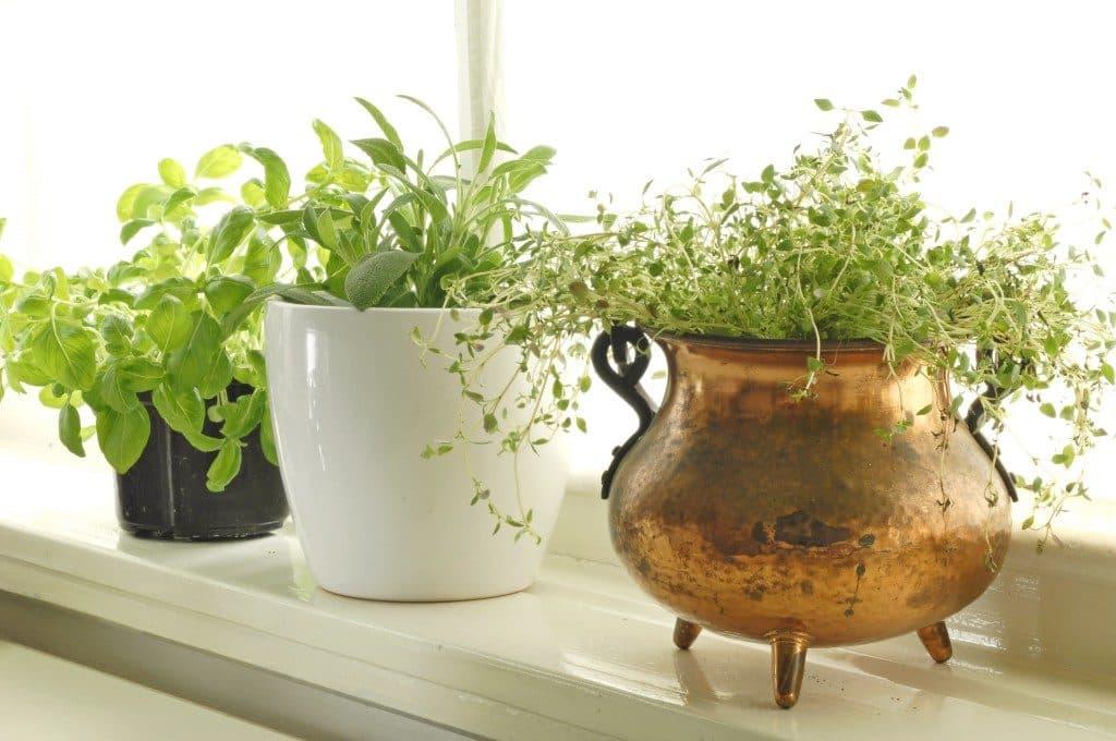 Come coltivare piante commestibili dentro la tua cucina - Donne Sul Web