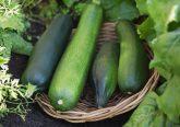zucchine cesto