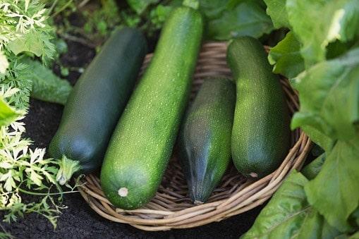 5 modi insoliti di cucinare le zucchine donne sul web for Cucinare le zucchine
