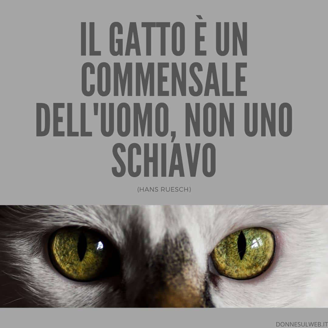 frasi belle gatti immagini