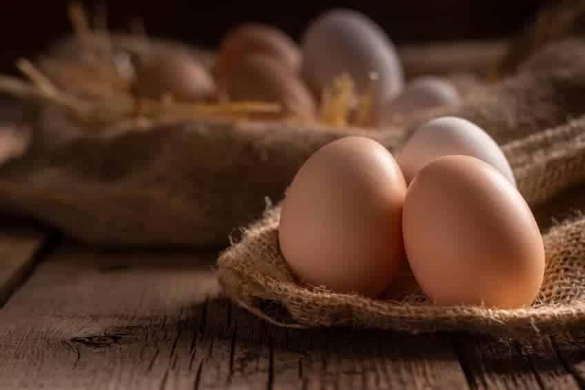 uova proprieta ricette tutto sulle uova